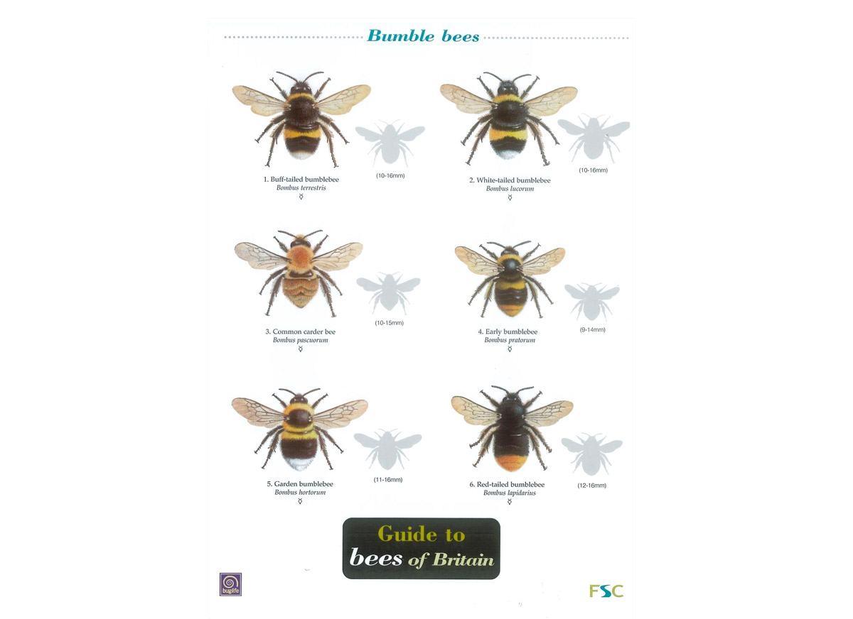 Id chart guide to bees of britain.