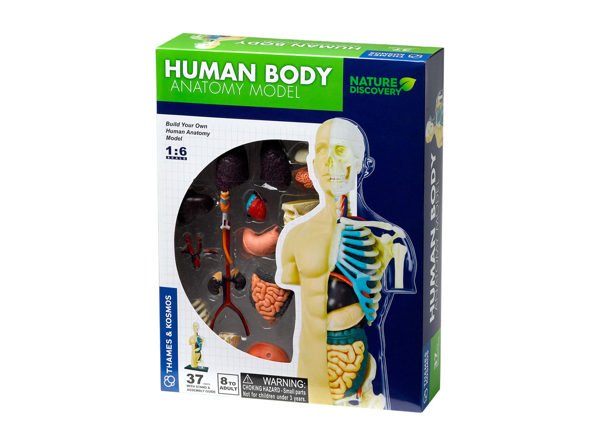 Human Body Anatomy Model Eden Project Shop