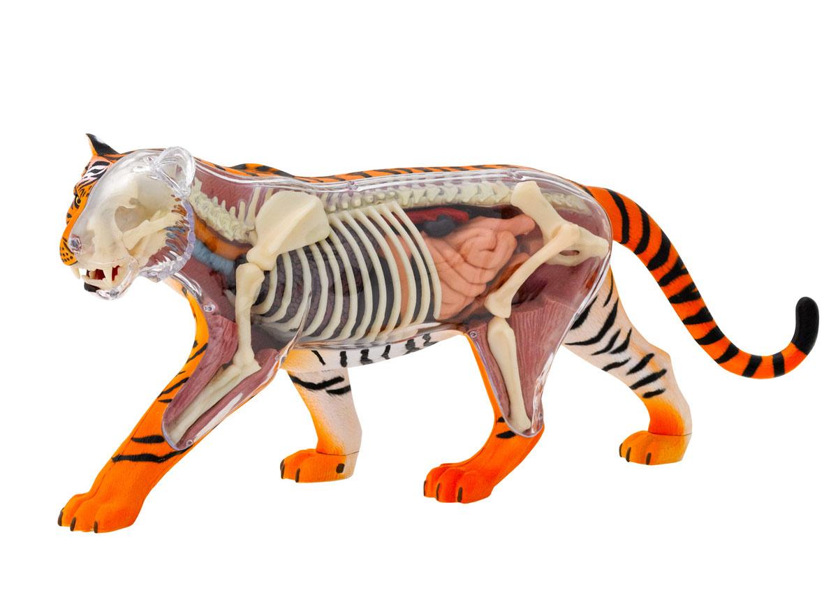 Animal anatomy tiger   Eden Project Shop
