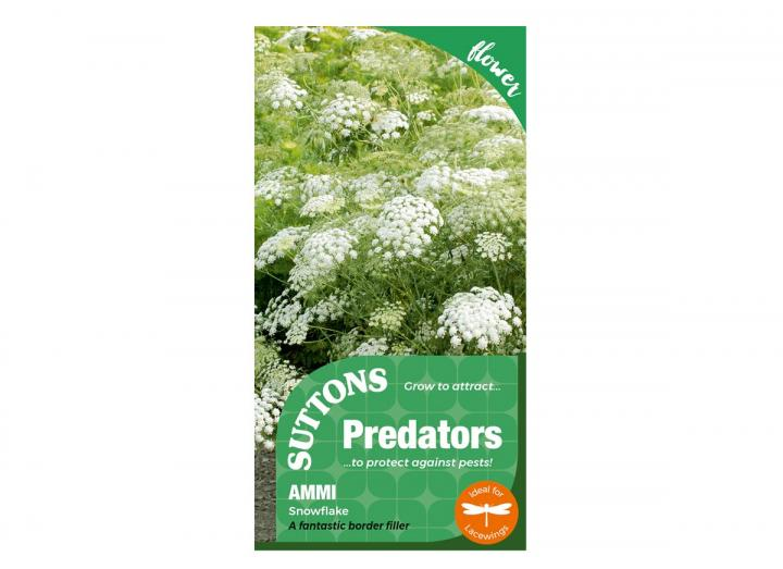 Ammi 'snowflake' seeds from Suttons