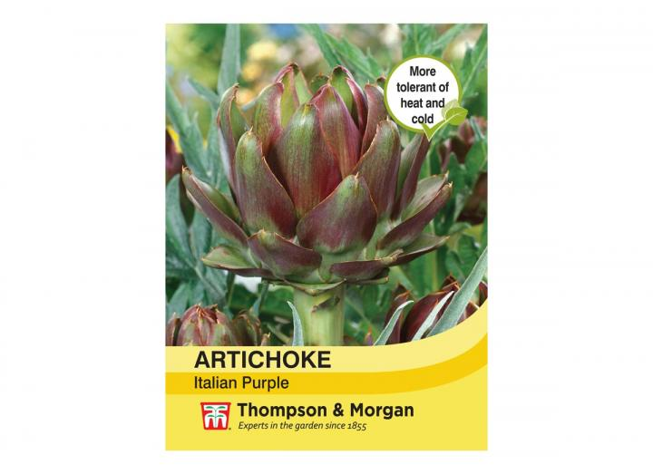 Artichoke 'Italian Purple' seeds from Thompson & Morgan