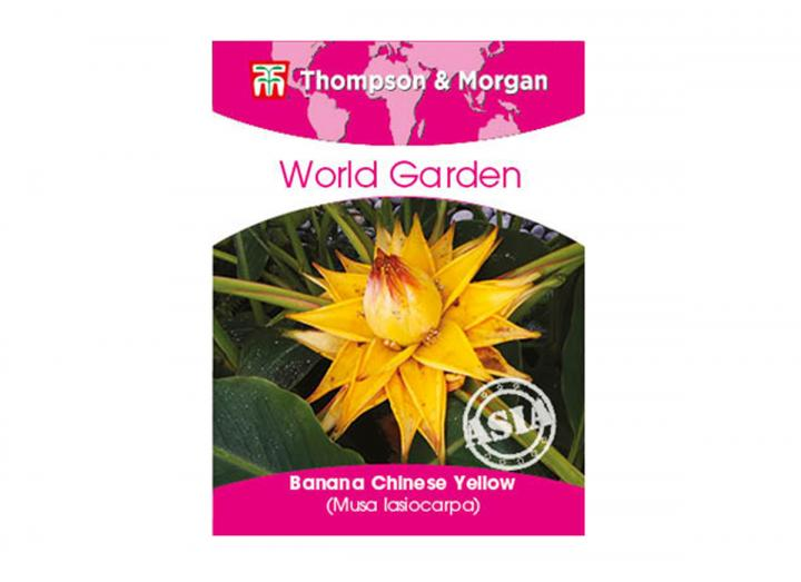 Thompson & Morgan world garden chinese yellow banana seeds