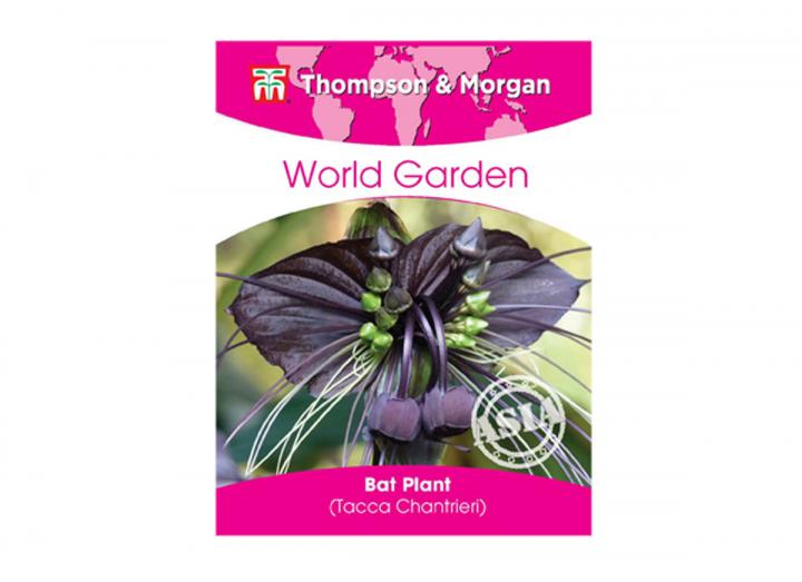 Bat plant seeds