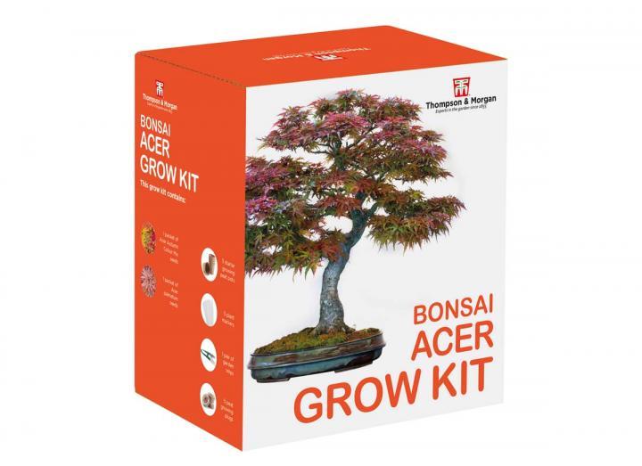 Bonsai acer grow kit
