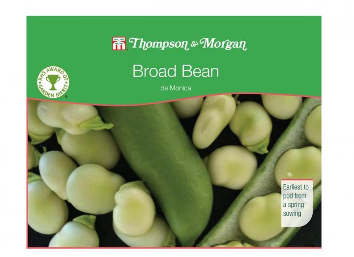 Broad bean 'de monica' seeds from Thompson & Morgan