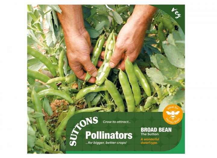 Broad bean 'The Sutton' seeds