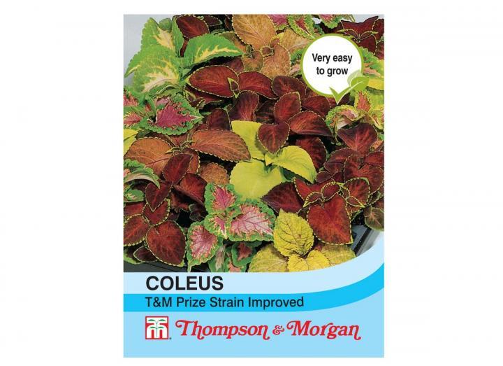 Coleus T&M prize strain improved seeds