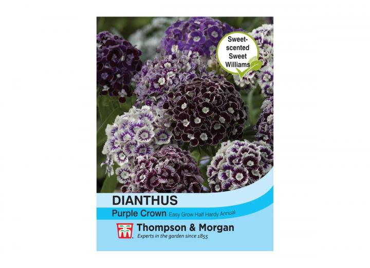 Dianthus 'Purple Crown' seeds from Thompson & Morgan