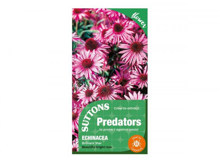Echinacea 'Brilliant Star' seeds, part of the Predators range from Suttons Seeds
