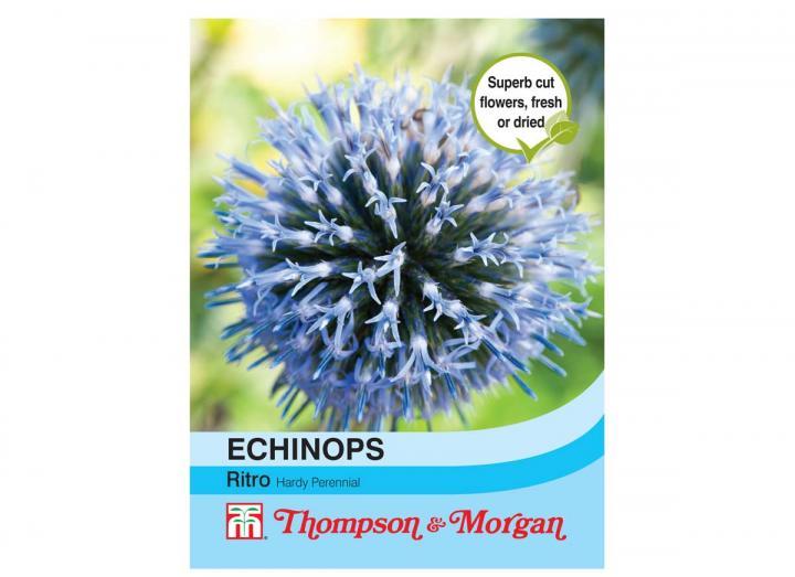 Echinops Ritro seeds