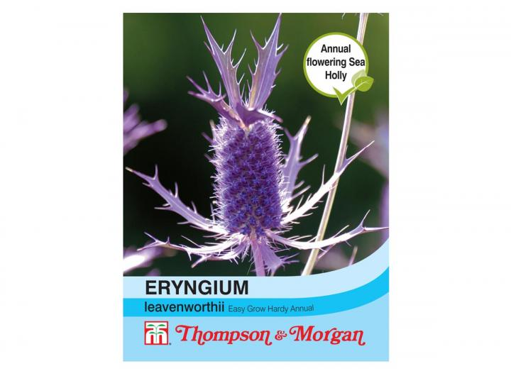 "Eryngium ""leavenworthii"" seeds"