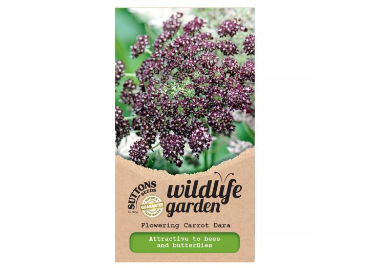 Suttons wildlife garden seeds - flowering carrot