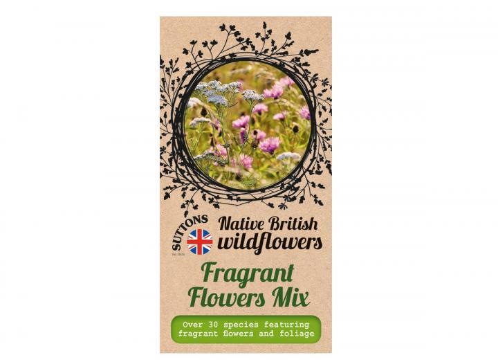 Native British wildflower seeds fragrant flower mix
