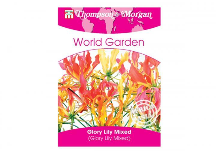 Glory lily seeds