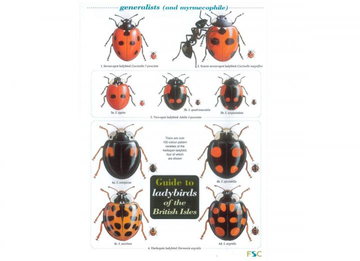 Ladybirds field guide