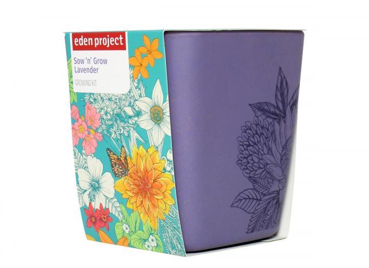 Sow 'n' grow lavender growing kit