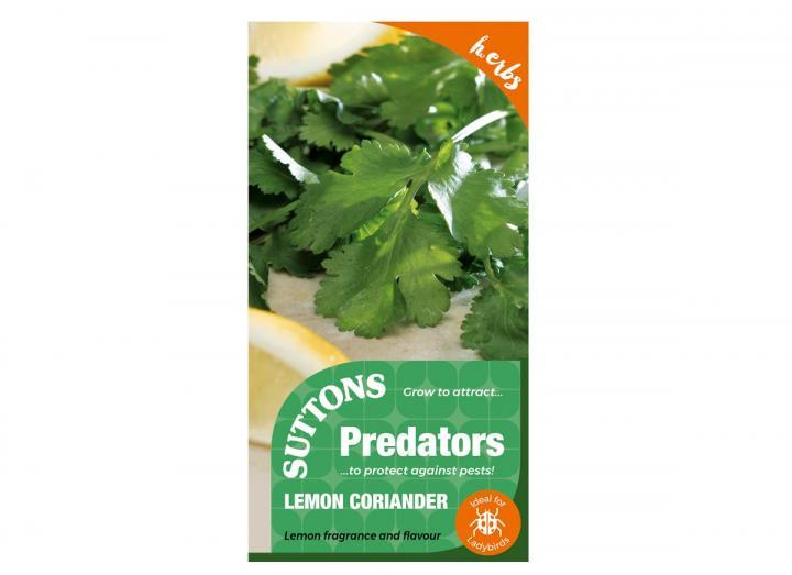 Lemon coriander seeds