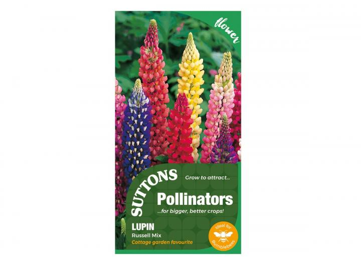 Lupin Russell Mix seeds