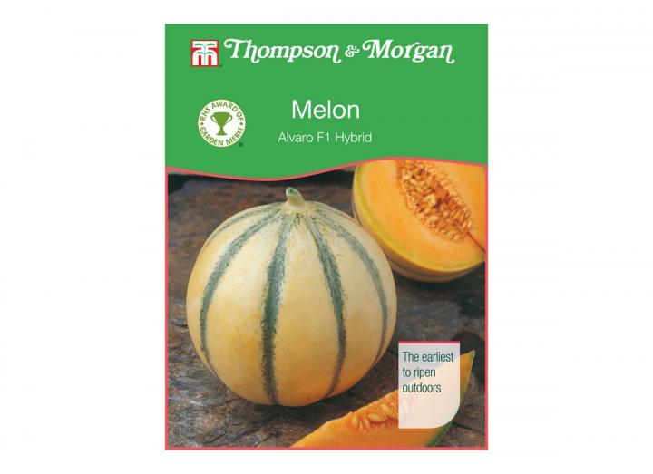 Melon 'alvaro f1 hybrid' seeds from Thompson & Morgan