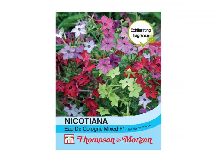 Nicotiana 'eau de cologne' seeds from Thompson & Morgan