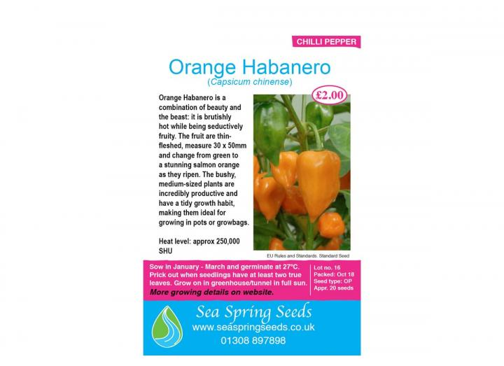 Orange habanero chilli seeds from Sea Spring Seeds