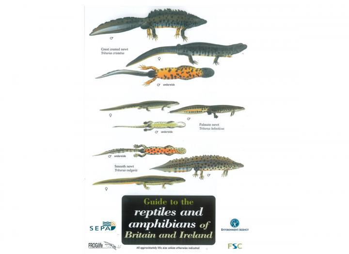 Reptiles and amphibians guide