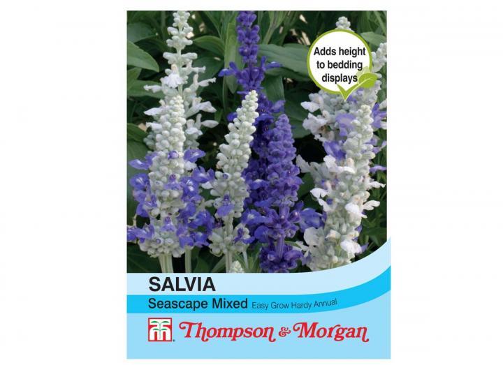 "Salvia ""Seascape Mixed"" seeds"