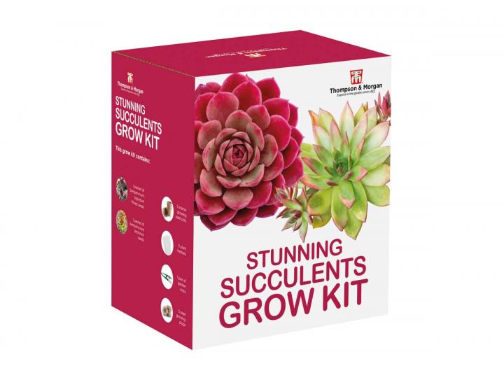 Succulent grow kit