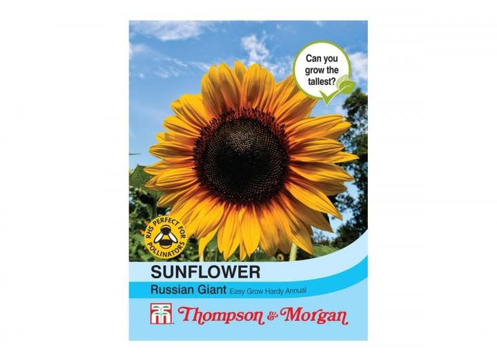 Sunflower 'Russian Giant' seeds from Thompson & Morgan