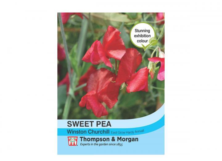 Sweet Pea 'Winston Churchill' seeds from Thompson & Morgan