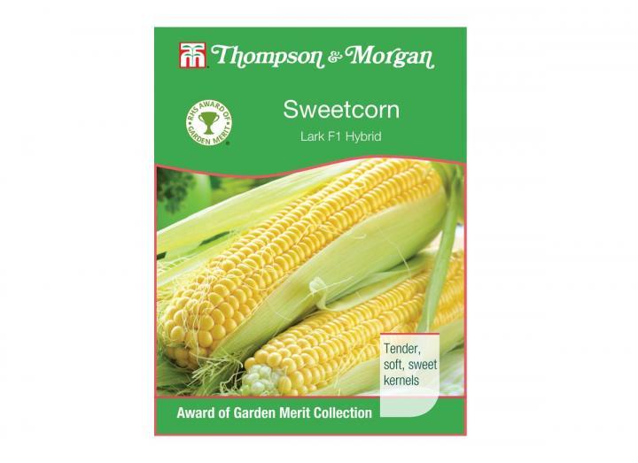 Sweetcorn 'Lark F1 Hybrid' seeds from Thompson & Morgan