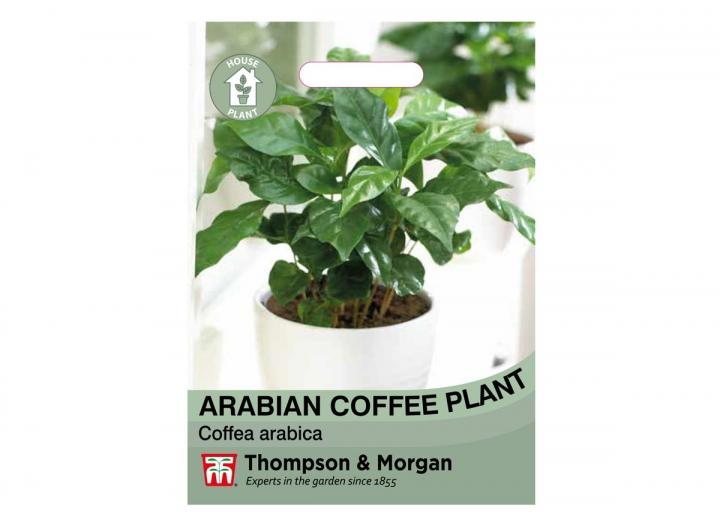 Arabian coffee plant seeds from Thompson & Morgan