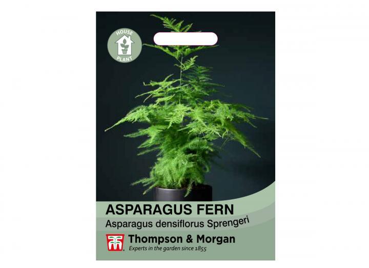 Asparagus Fern houseplant seeds from Thompson & Morgan