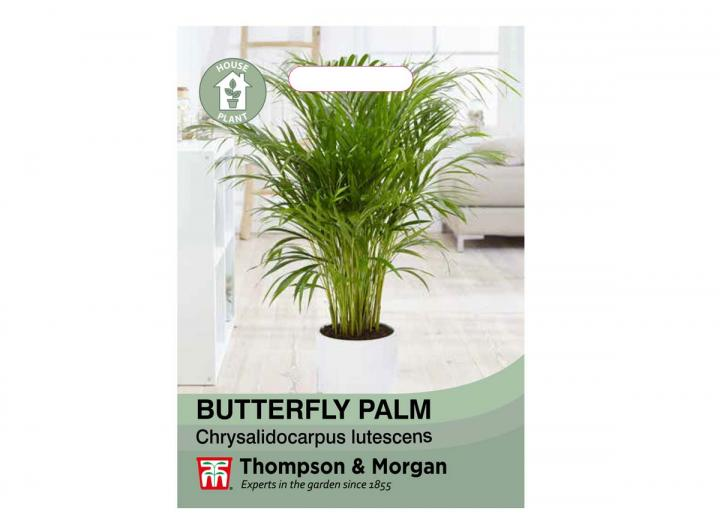 Butterfly Palm houseplant seeds from Thompson & Morgan