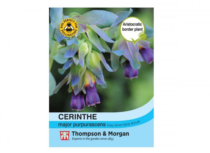 "Cerinthe Major ""Purpurascens"" seeds from Thompson & Morgan"
