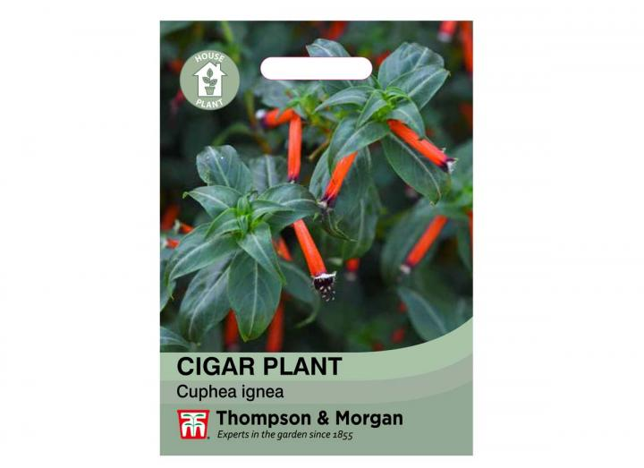 Cigar Plant house plant seeds from Thompson & Morgan
