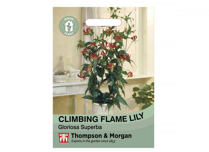 Climbing Flame Lily house plant seeds from Thompson & Morgan