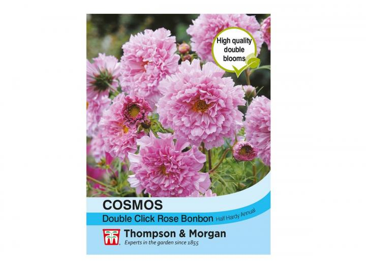 """Cosmos """"Double Click Rose Bonbon"""" seeds from Thompson & Morgan"""