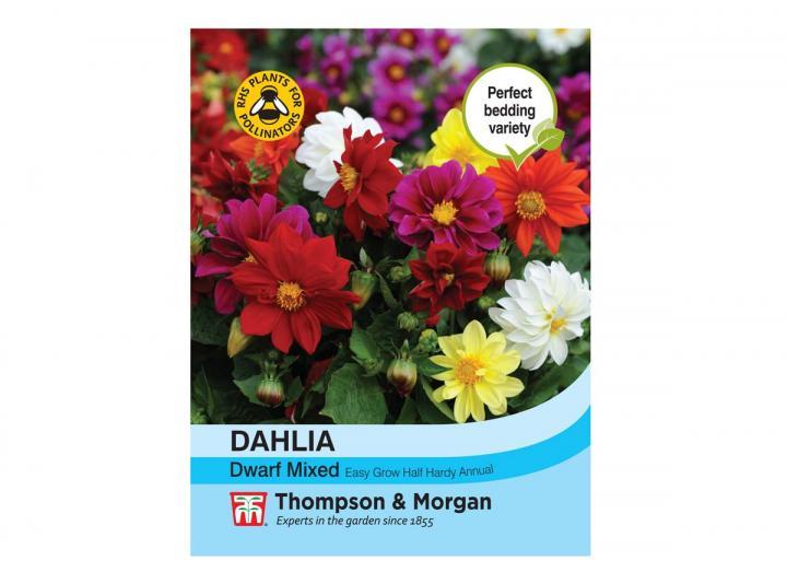 "Dahlia ""Dwarf Mixed"" seeds from Thompson & Morgan"
