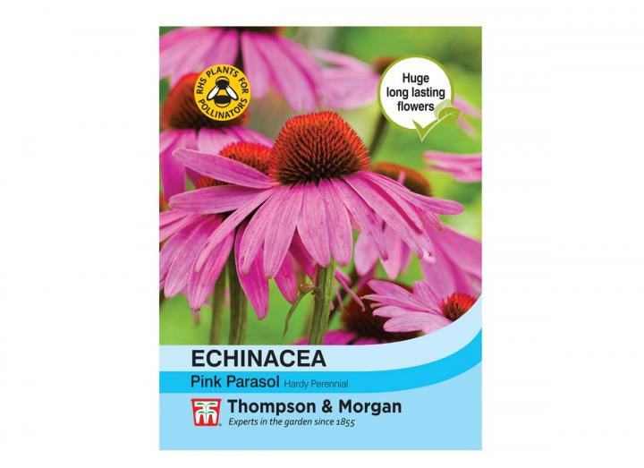 """Echinacea """"Pink Parasol"""" seeds from Thompson & Morgan"""