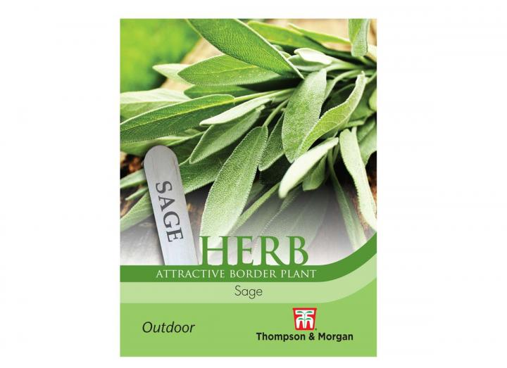 Sage herb seeds from Thompson & Morgan