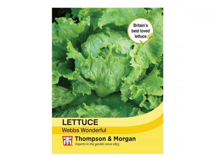 "Lettuce ""Webbs Wonderful"" seeds from Thompson & Morgan"