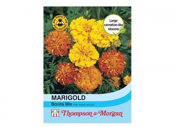 Marigold 'Bonita Mix' seeds from Thompson & Morgan