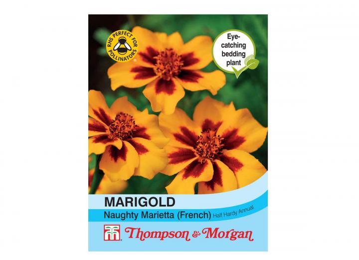 "Marigold ""Naughty Marietta"" (French) seeds from Thompson & Morgan"