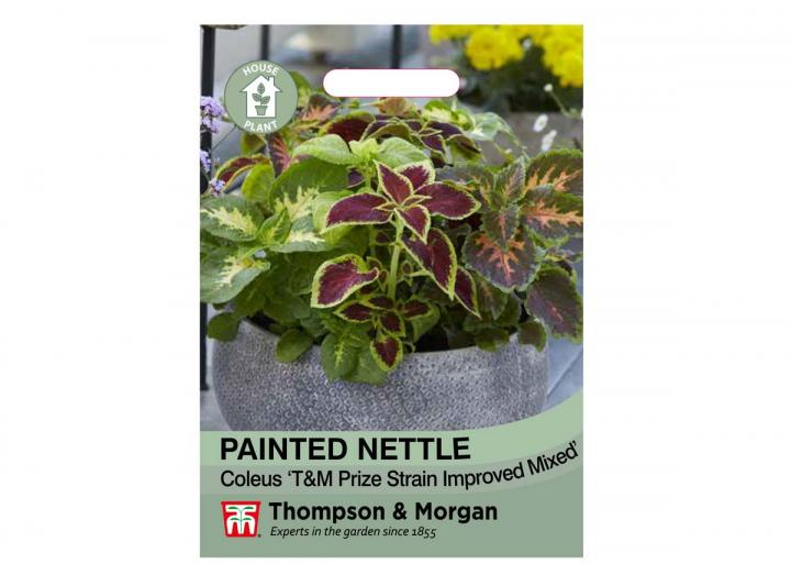 Painted Nettle house plant seeds from Thompson & Morgan
