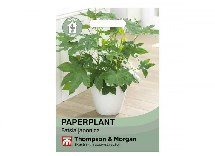 Paperplant house plant seeds from Thompson & Morgan