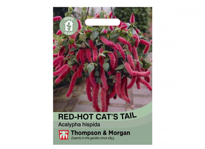Red-Hot Cat's Tail house plant seeds from Thompson & Morgan