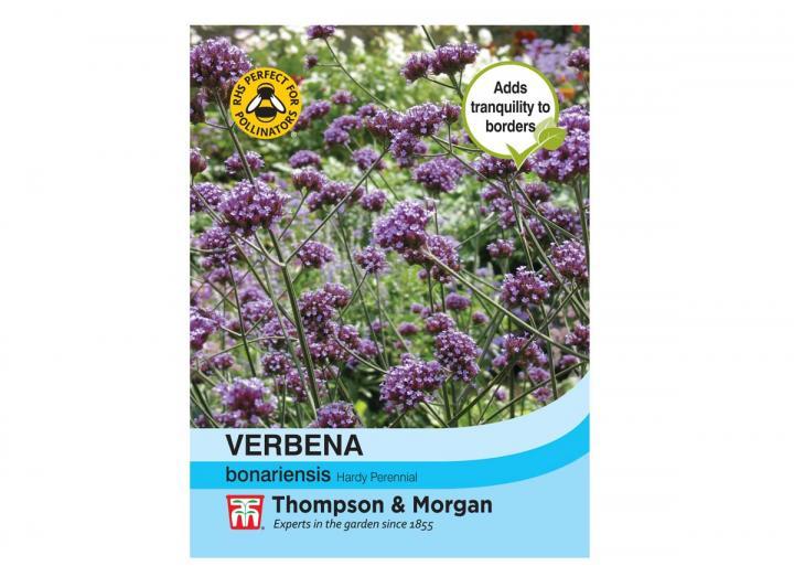 Verbena Bonariensis seeds from Thompson & Morgan