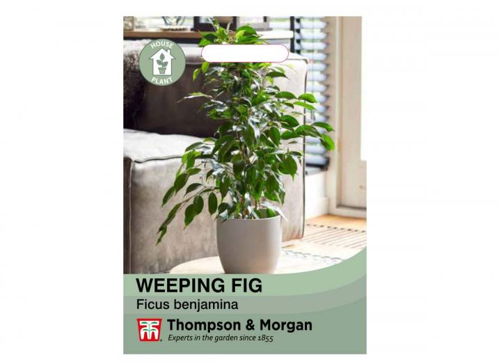 Weeping Fig house plant seeds from Thompson & Morgan