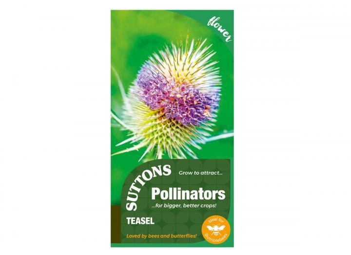 Pollinators range Teasel seeds